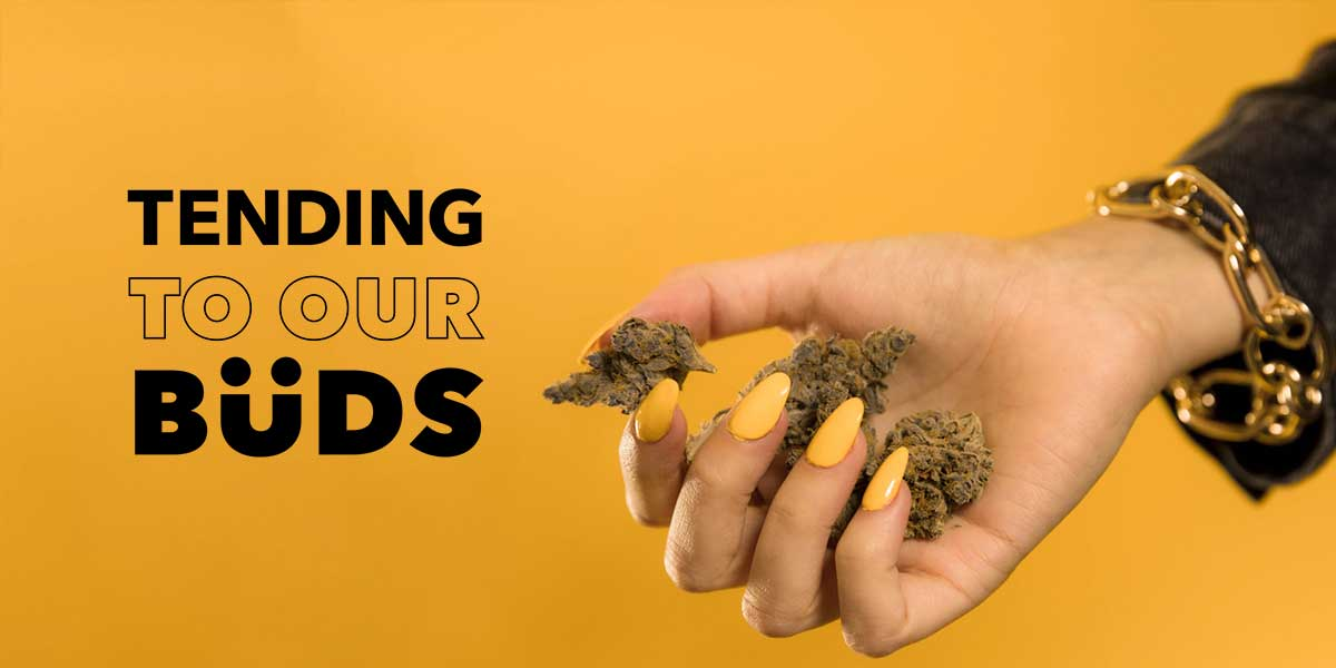 The Tending to Our Buds Charity Drive